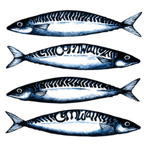 Cornwall Mackerel